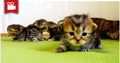 3-Week Old Kittens Learns How to Walk