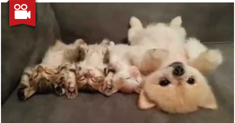 Kittens & Puppy Chillin' Together (Cuteness Overload)