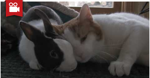 Cat & Bunny Are Best Friends