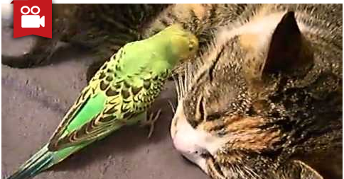 Patient Cat Mom & Parrot