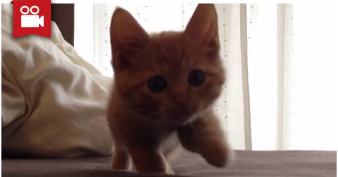 Kitten Stalking in His Own Slow Motion Movement