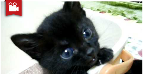 A Lot of Meows from Adorable Black Kitty