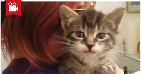 Kitten with Adorable Little Voice That will Melt Your Heart
