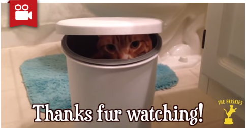 Dumpster Kitty - The Friskies Grand Prize Winner