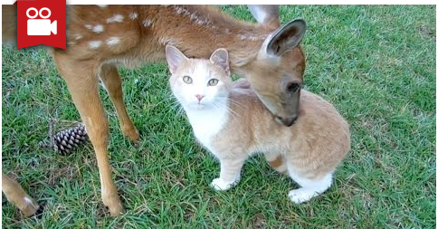 Baby DEER & CAT Adopt Each Other