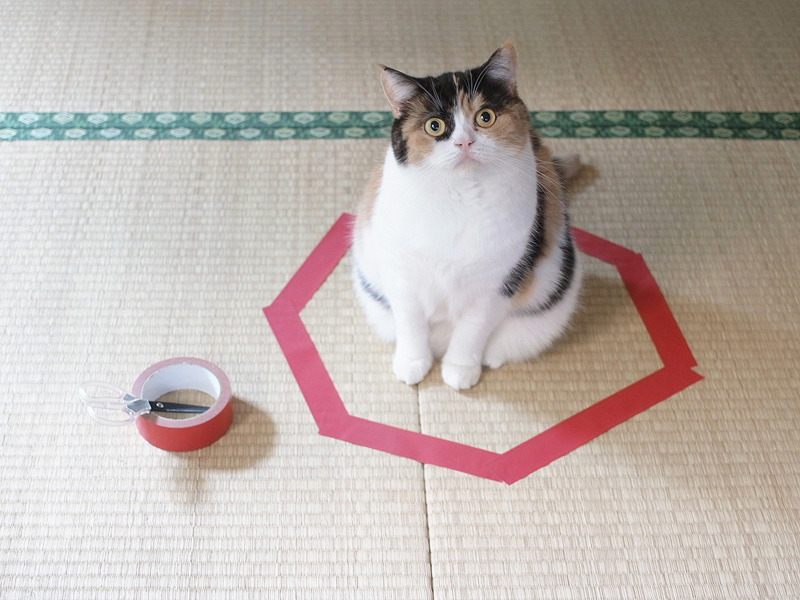 How to Trap a Cat (Cat Circles)