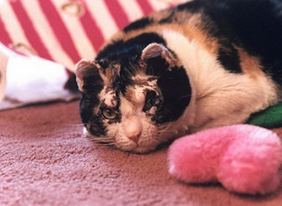 Remembering Scarlett the Precious Heroine Cat