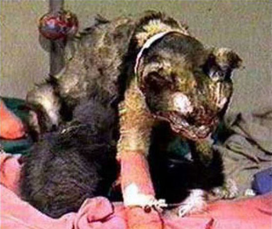 Remembering Scarlett the Precious Heroine Cat with Her Kittens