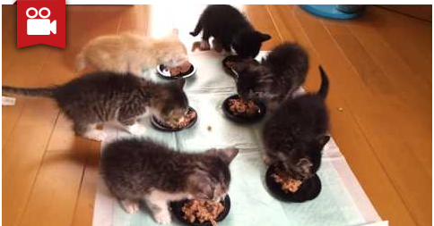 6 Cute Hungry Kittens
