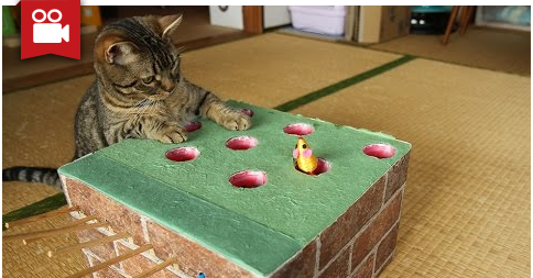 Cats Plays Handcrafted Whack-a-mole