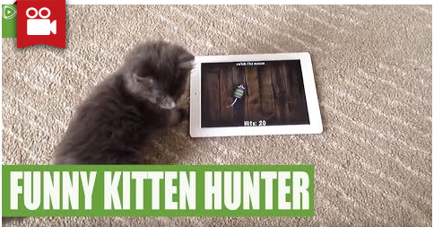 Kitten Went Crazy Over Tablet Game