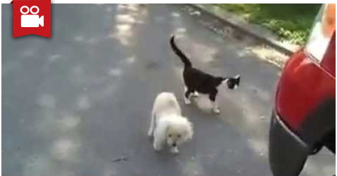 Cat Helps Blind Dog to See Where He's Going