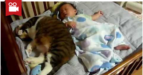 Cat Loves to Snuggle with this Baby